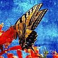 Sun Lit Eastern Tiger Swallowtail by John  Kolenberg