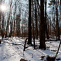 Sun On The Wild Turkey Trail by Gary Chapple