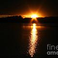 Sun Ray by Susan Herber