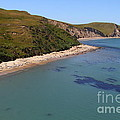 Sunbathing Elephant Seals Along A Beach At Point Reyes California . 7d16058 by Wingsdomain Art and Photography