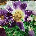 Sunburst In Lavender by RC DeWinter