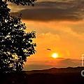 Sundown In Ellijay by Carol  Bradley