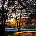 Sundown In Stanley Park by Will Borden