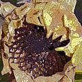 Sunflower 13 by Pamela Cooper
