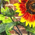 Sunflower 2 Sf2wc by Jim Brage