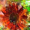 Sunflower 7 by Pamela Cooper