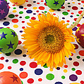 Sunflower And Colorful Balls by Garry Gay