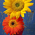 Sunflower and Mum by Garry Gay