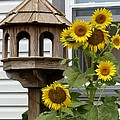 Sunflower Bird Feeder by Jeanette Oberholtzer