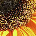 Sunflower Edge by Mary Lane