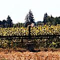 Sunflower Farm Scene by Maureen E Ritter