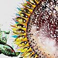 Sunflower Fish 3 by J Vincent Scarpace