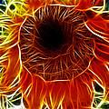 Sunflower Fractal by Donna Greene