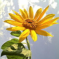 Sunflower by Marilyn Sargent