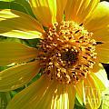 Sunflower No.11 by Christine Belt