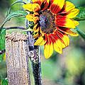 Sunflower On A Stick by Steve McKinzie