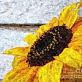 Sunflower Paint by Slavi Begov
