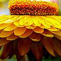 Sunflower Relaxed by M Stephen Bassett