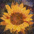 Sunflower Season by Trish Tritz