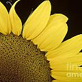 Sunflower Sunshine by James BO  Insogna