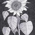 Sunflower by Teri  Naomi