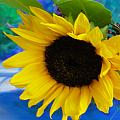 Sunflower Too by Shannon Grissom