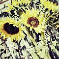 Sunflowers 2 by Traci Cottingham