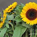 Sunflowers At Pikes Market by Pamela Walrath