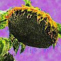 Sunflowers Birmingham Digital by Dianna Lawson