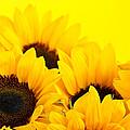 Sunflowers by Elena Elisseeva