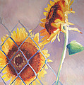 Sunflowers Fenced by Suzanne Cerny
