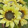 Sunflowers by Fran Loando