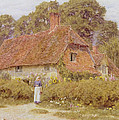 Sunflowers By Helen Allingham by Helen Allingham