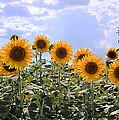 Sunflowers by Kristin Elmquist