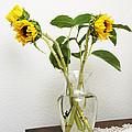 Sunflowers by Masha Batkova
