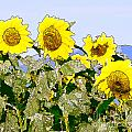 Sunflowers Sunbathing by Artist and Photographer Laura Wrede