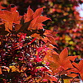 Sunlight Autumn Leaves by Christiane Schulze Art And Photography