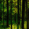 Sunlight In Forest by Michael Goyberg