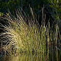 Sunlight On Grass Original by Rich Franco
