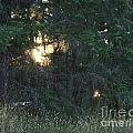 Sunlight Orbs 3 by Jane Whyte