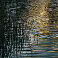 Sunlight Reflects On Rippled Water by Raul Touzon
