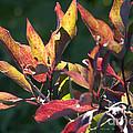 Sunlit Leaves by Darleen Stry
