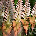 Sunlit Red Fern by Maria Urso