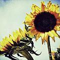 Sunny Days by Traci Cottingham