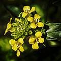 Sunny Floret by Linda Tiepelman