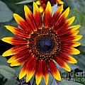 Sunny Flower by Kevin Fortier
