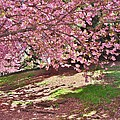 Sunny Patch Under The Cherry Trees by Margaret Bobb