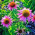 Sunny Pink by Steve McKinzie