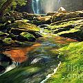 Sunrise At Elakala Falls by Adam Jewell