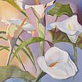 Sunrise Callas by Suzanne Cerny